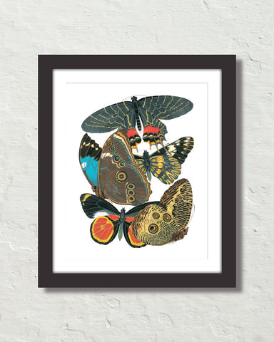 Art Deco Seguy Butterflies No. 20 Art Print