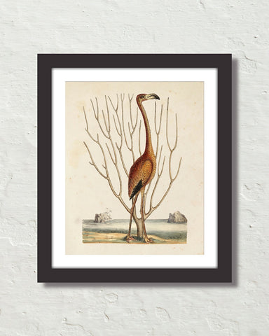 Vintage Sea Bird No. 15 Natural History Art Print
