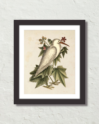 Vintage Sea Bird No. 77 Natural History Art Print