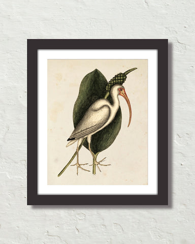 Vintage Sea Bird No. 82 Natural History Art Print