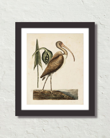 Vintage Sea Bird No. 83 Natural History Art Print