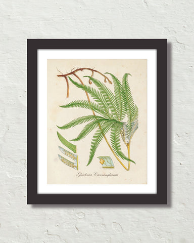 British Fern No. 6 Botanical Art Print