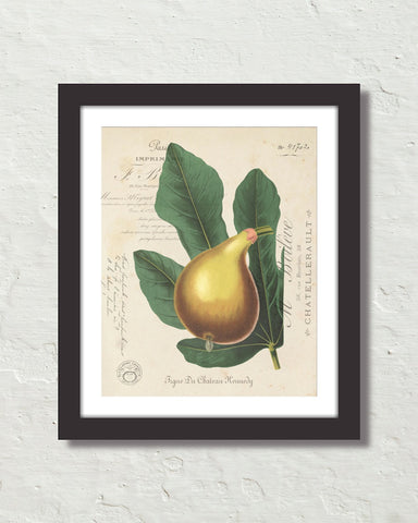 French Fig Collage Botanical Art Print