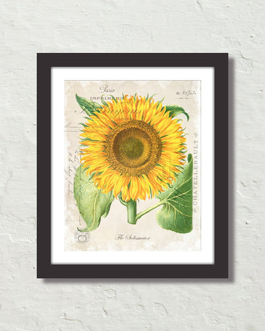 French Sunflower Collage Botanical Art Print