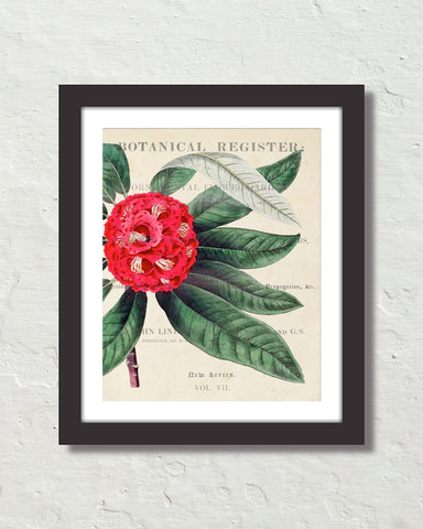 Vintage Floral Collage No.15 Botanical Art Print
