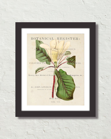 Vintage Floral Collage No. 407 Botanical Art Print