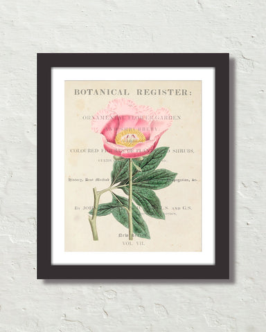 Vintage Floral Collage No. 819 Botanical Art Print