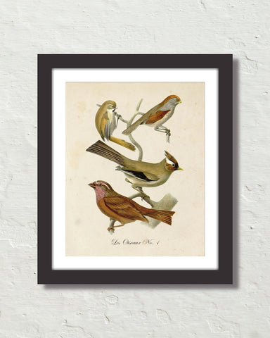 Vintage French Birds No.1 Botanical Art Print