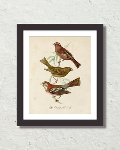 Vintage French Birds No. 2 Botanical Art Print