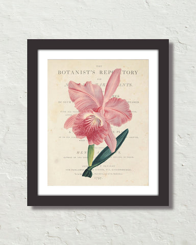 Vintage French Orchid Collage No.2 Botanical Art Print