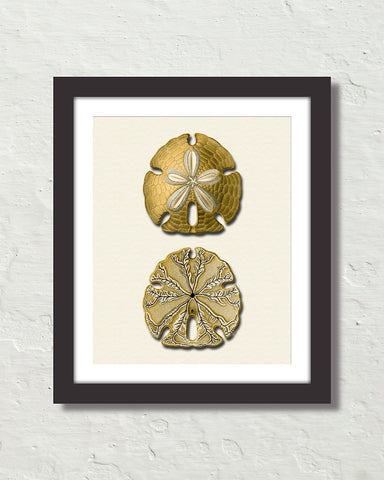 Vintage Sand Dollar No. 5 Gold Tint Art Print
