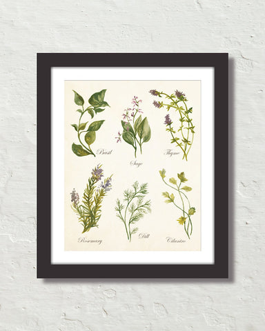 Watercolor Botanical Herbs Giclee Art Print