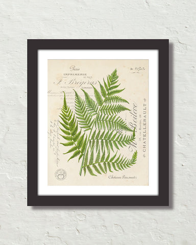 Vintage Fern Botanical Collage No. 31 Art Print