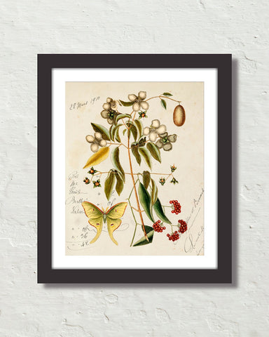 Vintage Butterfly Botanical Art Collage No. 20 Art Print