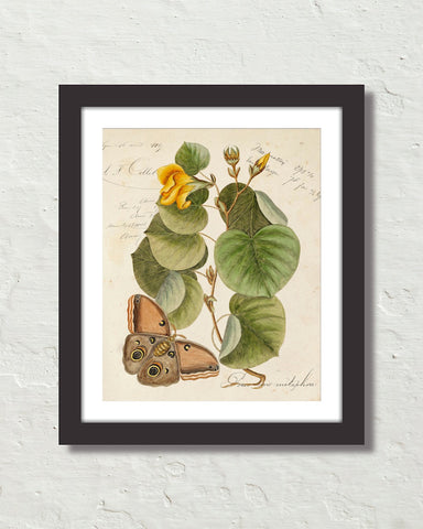 Vintage Butterfly Botanical Art Collage No. 21 Art Print