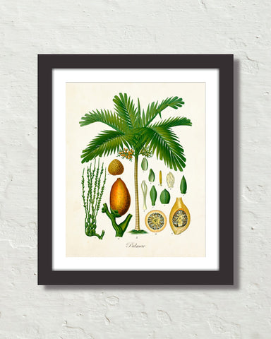 Vintage Palm Tree No. 15 Art Print