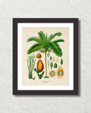 Vintage Palm Tree No. 14 Art Print