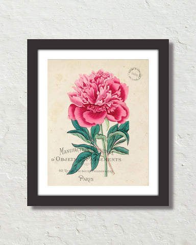 Vintage French Peony No. 1 Collage Botanical Art Print