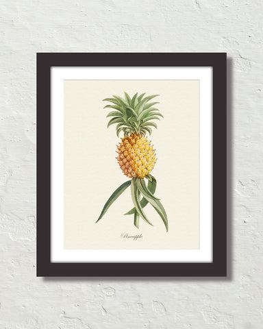 Vintage Tropical Pineapple Botanical Art Print