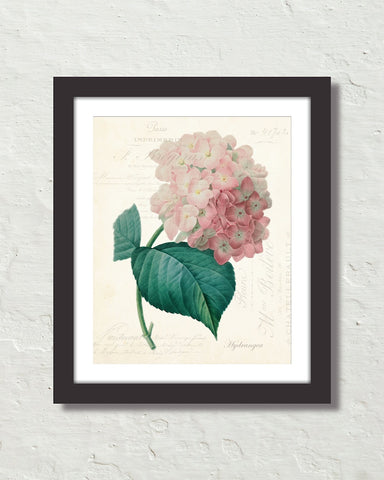 Vintage French Hydrangea Collage Art Print