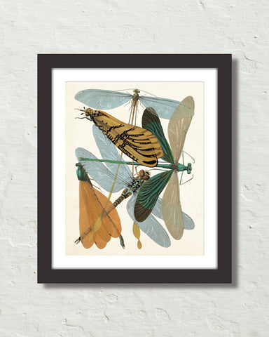 Art Deco Seguy Insects No. 25 Art Print