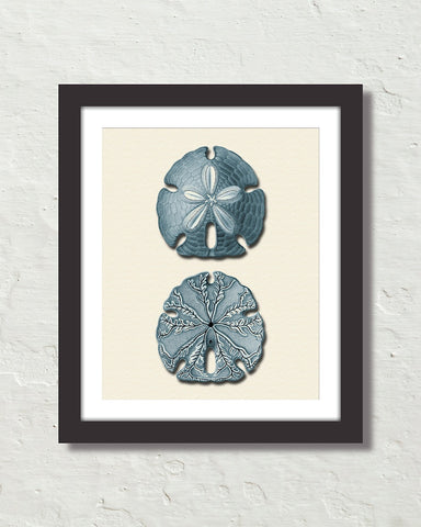 Vintage Sand Dollar No. 4 Blue Tint Art Print