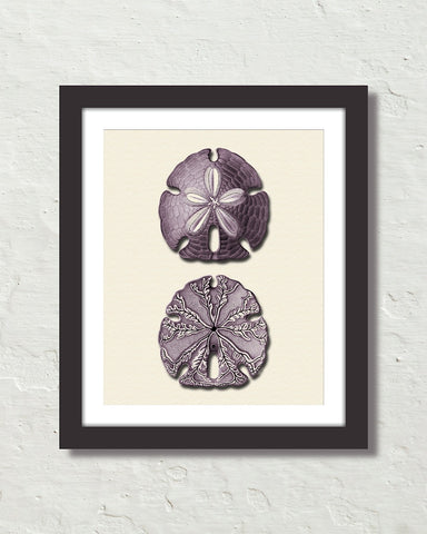 Vintage Sand Dollar No. 3 Purple Tint Art Print