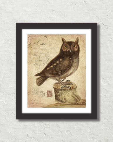 Vintage Owl Collage No. 72 Original Natural History Art Print