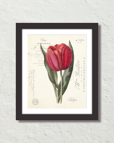 Vintage Tulip Collage No. 66 Botanical Art Print