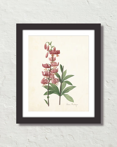 Lilium Martagon Antique Botanical Art Print