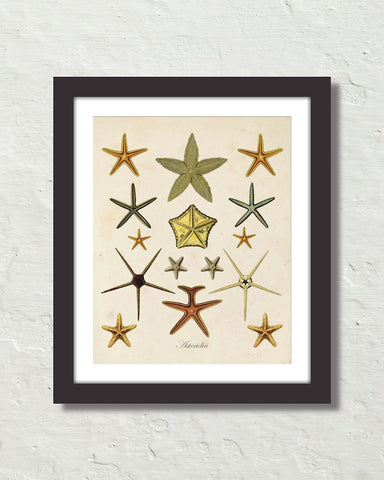 Vintage Starfish Collage No. 1 Art Print
