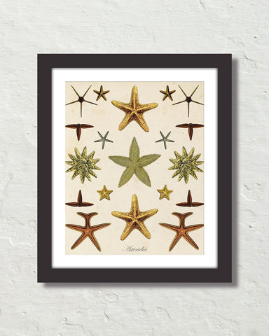 Vintage Starfish Collage No. 2 Art Print