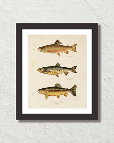Vintage Trout Fish Art Print No. 1