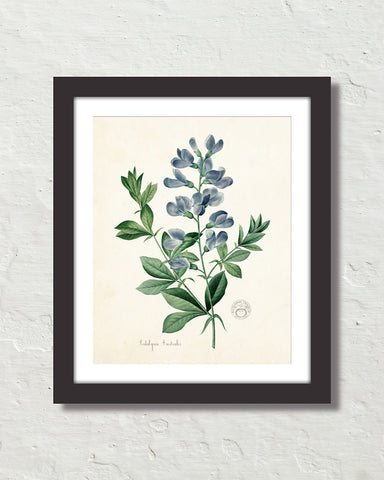 Antique French Blue Botanical No. 20 Art Print