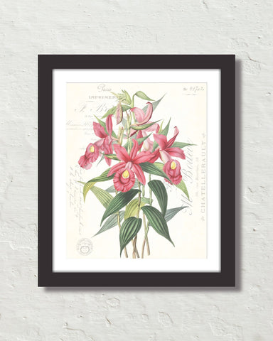 Vintage Orchid Collage No. 1 Art Print