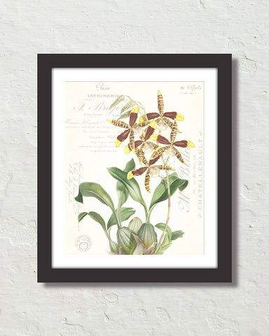 Vintage Orchid Collage No. 23 Art Print