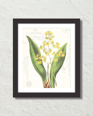 Vintage Orchid Collage No. 25 Art Print