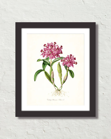 Vintage Orchid Flower Series No. 13 Art Print