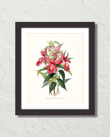 Vintage Orchid Flower Series No. 37 Art Print