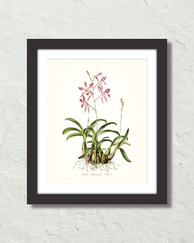 Vintage Orchid Flower Series No. 9 Art Print