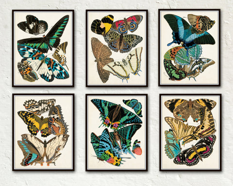 Butterfly Print Set No. 1 - Set of 6 - Seguy Butterflies