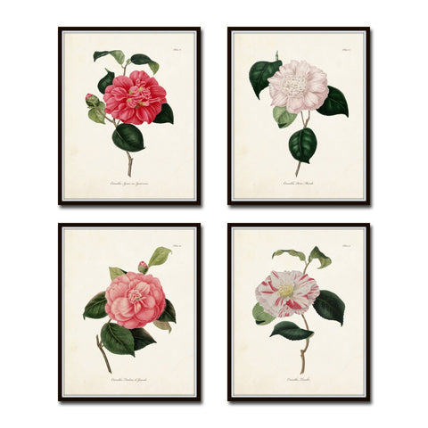 French Camellias Print Set No. 4