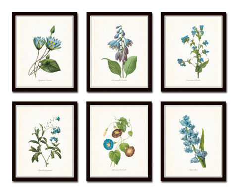 Blue Redoute Botanical Floral Print Set No. 2