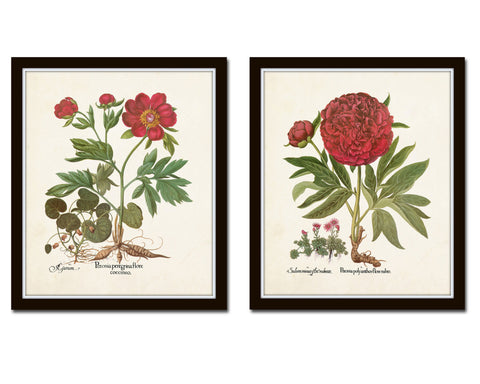 Antique Peony Floral Print Set No. 5