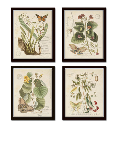Vintage Butterfly and Botanical Print Set No.1