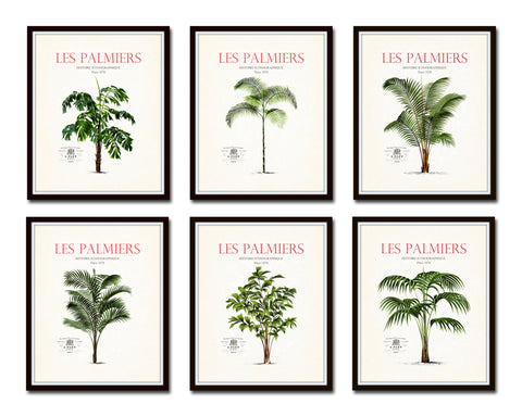 Vintage French Palm Tree Print Set No. 12