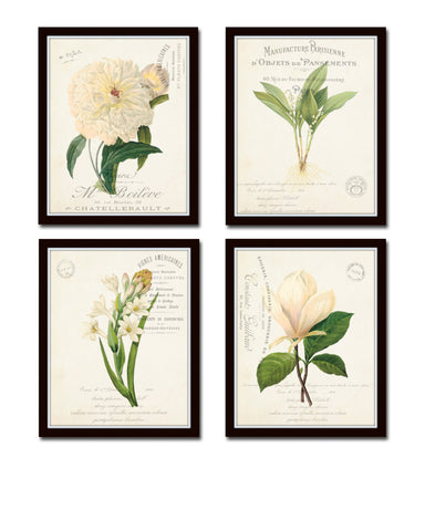 French Botanical Collage Floral Print Set No. 3