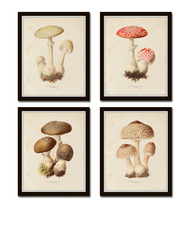 Mushroom Vegetable Art Print Set No. 3