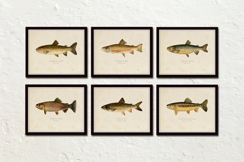 Vintage Trout Print Set No. 2