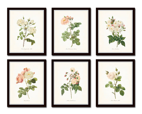Redoute Roses Botanical Print Set No. 10